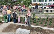 Die Erdbeerenpflanzen sollen zur Wiese zusammenwachsen. Im Vordergrund haben Kindergärtler Gemüse gesetzt. (Bild: Andrea Häusler)