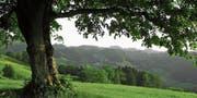 Hügelige Landschaft im Tannzapfenland: Ein Naturpark kommt hier nicht zu Stande. (Bild: Olaf Kühne)