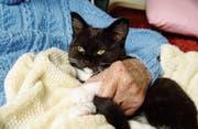 Abwechslung im Alltag, Förderung der Kommunikation und Beruhigung von Demenzkranken sind positive Effekte von Haustieren. (Bild: Getty)