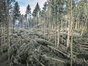 Sturm «Burglind» hat im Wald eines Bauern aus Lieli grossen Schaden angerichtet. (Bild: Pius Amrein (8. Januar 2018))