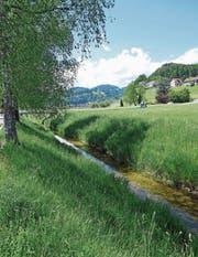 «Schön, wenn Kinder wieder am Wasser götschen könnten», sagt Christian Sepin, Gemeindepräsident von Au, zum geplanten Naturpark Kobel. (Bild: Kurt Latzer)