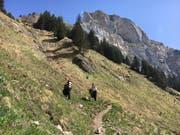 Rund zwei Stunden dauerte die Wanderung vom Berggasthaus Alp Rohr auf den Hohen Kasten. (Bild: PD)