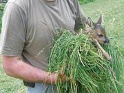 Aufgefundene Kitze sollten beispielsweise mit einem Büschel Gras und nicht mit der blossen Hand berührt werden, da sie sonst von der Mutter verstossen werden könnten. (Bild: PD)