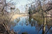Die freigelegten und mit Weiherwasser gefluteten Moorflächen im Schorenriet bieten Amphibien ideale Lebensbedingungen. (Bild: PD)