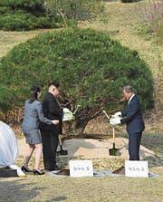 Kim Jong Un (links) und Moon Jae In beim Pflanzen eines Baums. (Bild: (AP))
