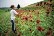 Eine Praktikantin auf einem Bauernhof im Napf in Hergiswil. (Bild: Pius Amrein)