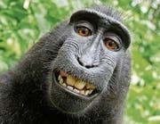 Frech grinst der indonesische Makake Naruto in die Fotokamera. (Bild: Selfie)
