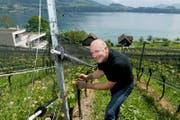 Freut sich über das schnelle Wachstum der Reben: Karl Sigrist auf seinem Weingut in Meggen. (Bild: Corinne Glanzmann (7. Mai 2018))
