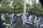 Immer tiefer steht dieser Baum im Wasser. Der Baumeister selbst wollte nicht vor die Kamera. (Bild: Jessica Nigg)