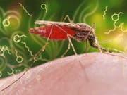 Der Malariaerreger verändert das Duftstoffprofil eines infizierten Menschen. Diese Erkenntnis könnte für die Entwicklung eines neuen, kostengünstigen Diagnosetests genutzt werden. (Bild: ETH Zürich/CDC/James Gathany)