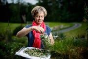 Judith Felder präsentiert in ihrem Garten die getrockneten Weissdorn-Blüten. Bild: Stefan Kaiser (Menzingen, 14. Mai 2018)