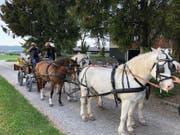 Eine Familientradition: Mehrmals in der Woche macht die Familie Ammann Ausfahrten mit der Kutsche. (Bild: PD)