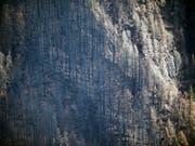 Der von einem Teenager ausgelöste Waldbrand hat in der Felsenschlucht Columbia River Gorge riesige Flächen zerstört. (Bild: KEYSTONE/AP The Oregonian/MARK GRAVES)