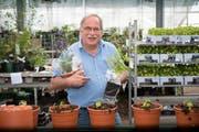 1/4: Markus Kobelt ist der bekannteste Onlineversand-Gärtner der Schweiz. (Bilder: Ralph Ribi)