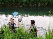 Die Jungschwäne wurden aus dem Binnenkanal gefischt. (Bild: Landespolizei)