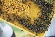 Bienen sind Teil der heutigen landwirtschaftlichen Ausbildung. (Bild: Nana do Carmo)