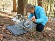 Elisabeth Graf Pannatier liest die Menge des gesammelten Bodenwassers ab. Eine Forschungsgruppe unter ihrer Leitung hat herausgefunden, dass sich die Bodenwasserchemie in Europas Wäldern langsam verändert. (Bild: WSL/Reinhard Lässig)