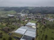 Die Gemeinde Altwis aus der Luft (Drohnen-Bild: Pius Amrhein)