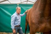 Marco Hermann kümmert sich um die Gesundheit der Rennpferde. (Bild: Urs Bucher)