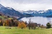 Von der Planungszone betroffen ist unter anderem das Gebiet Teufibalm oberhalb von Vitznau. (Bild: Roger Grütter)