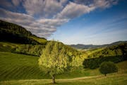 Blick ins Guldental im Naturpark Thal im Kanton Solothurn (Bild: PD)