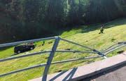 Das Auto des Seniors überschlug sich mehrmals, bevor es in einem Hang zum Stillstand kam. (Bild: Kantonspolizei Appenzell Ausserrhoden)