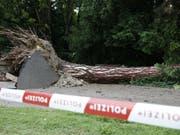 Das Unwetter war so stark, dass es im Grazer Stadtpark ein Baum entwurzelt wurde. Dabei kam ein Mann ums Leben. (Bild: Keystone/APA/APA/ERWIN SCHERIAU)