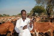 Ein von VSF-Suisse ausgebildeter Laientierarzt behandelt Kühe in seiner Gemeinschaft im Südsudan. (Bild: PD)