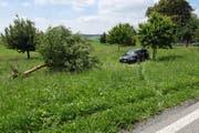 Der Apfelbaum liegt nach dem Unfall entwurzelt auf der Wiese. (Bild: Luzerner Polizei (Römerswil, 14. Juni 2018))
