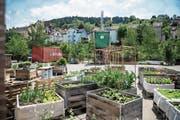 Urban Gardening in Hochbeeten und kreative Ideen aus Schiffscontainern: Das Lattich-Quartier auf dem Areal des St.Galler Güterbahnhofs bietet viel Platz für Experimente. (Bild: Sabrina Stübi)