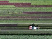 Ein neuer Pflanzenschutzroboter soll ermöglichen, bis zu 70 Prozent weniger Pestizide einzusetzen. (Bild: A.Anex/Keystone (Galmitz, 1.Juni 2018))