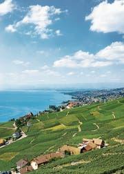 Etwa am Genfersee besitzen viele vermögende Ausländer einen Wohnsitz. (Bild: Getty (Lavaux, 30. August 2016))