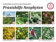 «Problempflanzen erkennen und richtig handeln» - diese und weitere Hilfsmittel publiziert das Amt für Umweltschutz auf der Website. (Screenshot: PD)