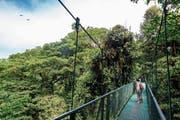 Touristen bestaunen den Regenwald in Monteverde, einem Ort im bergigen Nordwesten Costa Ricas. (Bild: Simon Dannhauer/Getty (Monteverde, 25. Januar 2017))