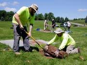 Wissenschafter graben derzeit das Gelände des legendären Woodstock-Festivals aus, um es zum 50. Jahrestag des Festivals im August 2019 vorzubereiten. (Bild: KEYSTONE/AP/RICHARD DREW)