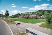 Wo heute noch frisches Gras wächst, wird bald ein Mehrfamilienhaus gebaut. Bild: Christian H. Hildebrand (Unterägeri, 27. Juni 2018)