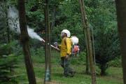 Ein Obstbauer versucht im seinem Obstgarten mit Loeschkalk gegen den Feuerbrand vorzugehen. Nana do Carmo 22. August 2008