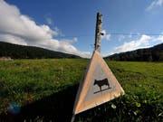 Im Vallée de Joux dürfen gewisse Moore und Feuchtwiesen seit 1987 nicht mehr beweidet oder gemäht werden. Diese vermeintliche Schutz hat nun aber dazu geführt, dass typische Moorpflanzen von grösseren Gewächsen verdrängt wurden. (Bild: KEYSTONE/DOMINIC FAVRE)