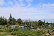 Bei dieser Aussicht auf den See macht das Gärtnern richtig Spass. (Bild: Perrine Woodtli)