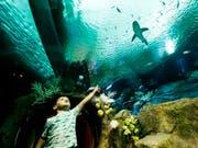 Besucher und Hai in der neu eröffneten Austellung im New Yorker Aquarium. Dieses wurde durch Wirbelsturm Sandy 2012 schwer beschädigt. (Bild: KEYSTONE/EPA/JUSTIN LANE)