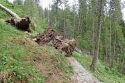 Sichtbare Folgen der Winterstürme: Der ramponierte Wander- und Bikeweg Horweli-Lochalp auf Alpnacher Boden. (Bild: PD)