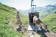 Mit einer Viehseilbahn wurden 72 Rinder auf den Oberstafel der Alp Alplen transportiert. (Bild: Urs Flüeler/Keystone (30. Juni 2018))