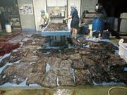 Diese Plastiksäcke wurden im Magen des verendeten Wals gefunden. (Bild: Reuters, Songkhla, 1.Juni 2018)