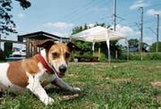 Auf der neuen Hundefreilaufwiese beim Schiessstand Choller darf die Leine weggelassen werden. (Bild: Stefan Kaiser (Zug, 4. Juni 2018))