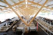Gutsbetrieb Chamau: Der vom Kanton umgebaute Gutsbetrieb wird von der Landwirtschaftlichen Schule Schluechthof betrieben. (Bild: Stefan Kaiser (Zug, 04.Juni 2018)