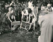 Am 6. Juni 1968 setzt Anton Trösch (links mit Karohemd) zusammen mit Gleichgesinnten am Nussbaumersee sechs norwegische Biber aus. (Bild: PD/Archiv/Anton Trösch)