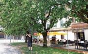 Auch Thomas Bösch, Wirt des Restaurants Freiraum, nascht gern von den reifen Früchten. (Bild: Susi Miara)