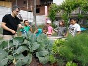 Auf dem Bauernhof bieten sich zahlreiche Möglichkeiten, den Schulstoff erlebbar zu machen. Achim Arn zeigt den Schülern die verschiedenen Pflanzen im Garten der Familie Fitze. (Bilder: Gianni Amstutz)