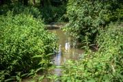 """Der Murg-Auen-Park in Frauenfeld ist im neuen Exkursionsführer """"Wege durch die Wasserwelt"""" des Hydrologischen Atlasses der Schweiz zu finden. (Bild: Reto Martin)"""