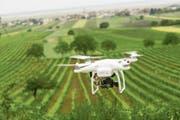 Drohnen helfen beim Verteilen von Pflanzenschutzmitteln in schwer zugänglichen Reben. (Bild: Imago)